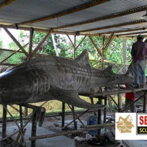 Kelik-studio-semar-mesem-ikan-unik-besar-ikan-singapore