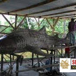 Kelik Studio Semar Mesem Patung Whilshark Seni Patung Nusantara