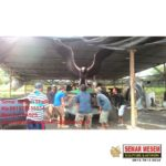 Jual Patung Fiberglass/081578135034