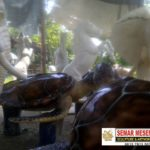 Jual Patung Maskot-(081578135034)