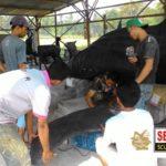 Jasa Pembuatan Patung Ikan Whaleshark