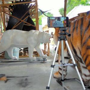 Patung Harimau Lucu Koramil Patung Harimau Loncat Patung Harimau Malaysia